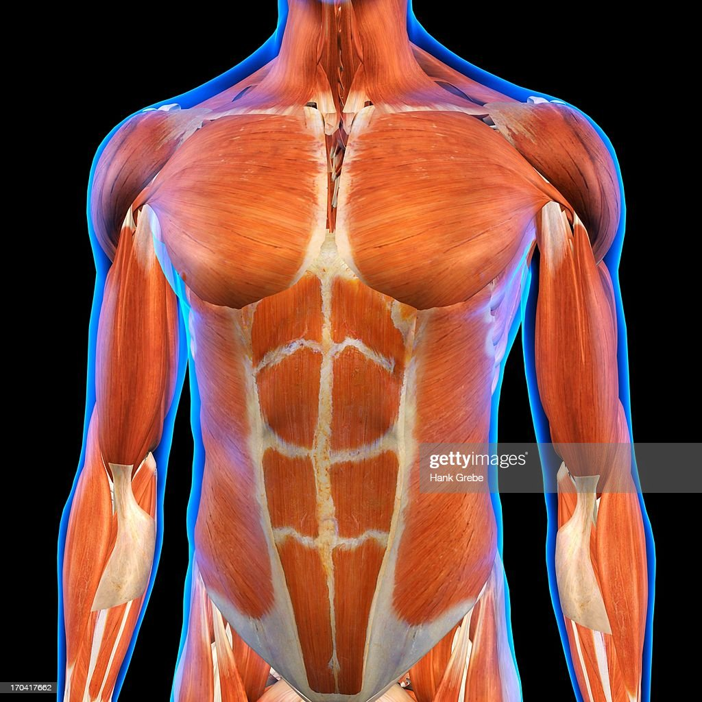 Front View of Male Chest and Abdominal Muscles Anatomy in Blue X-Ray outline. Full Color 3D computer generated illustration on Black Background : Stock Illustration