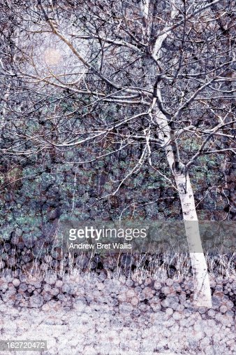 Frosty winter trees at dawn : Stock Illustration