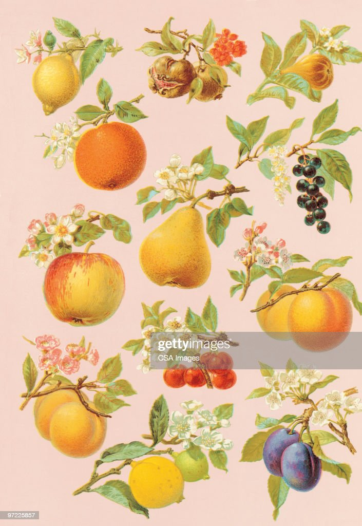 Fruit on trees and plants stock illustration getty images - Fruit trees every type weather area ...