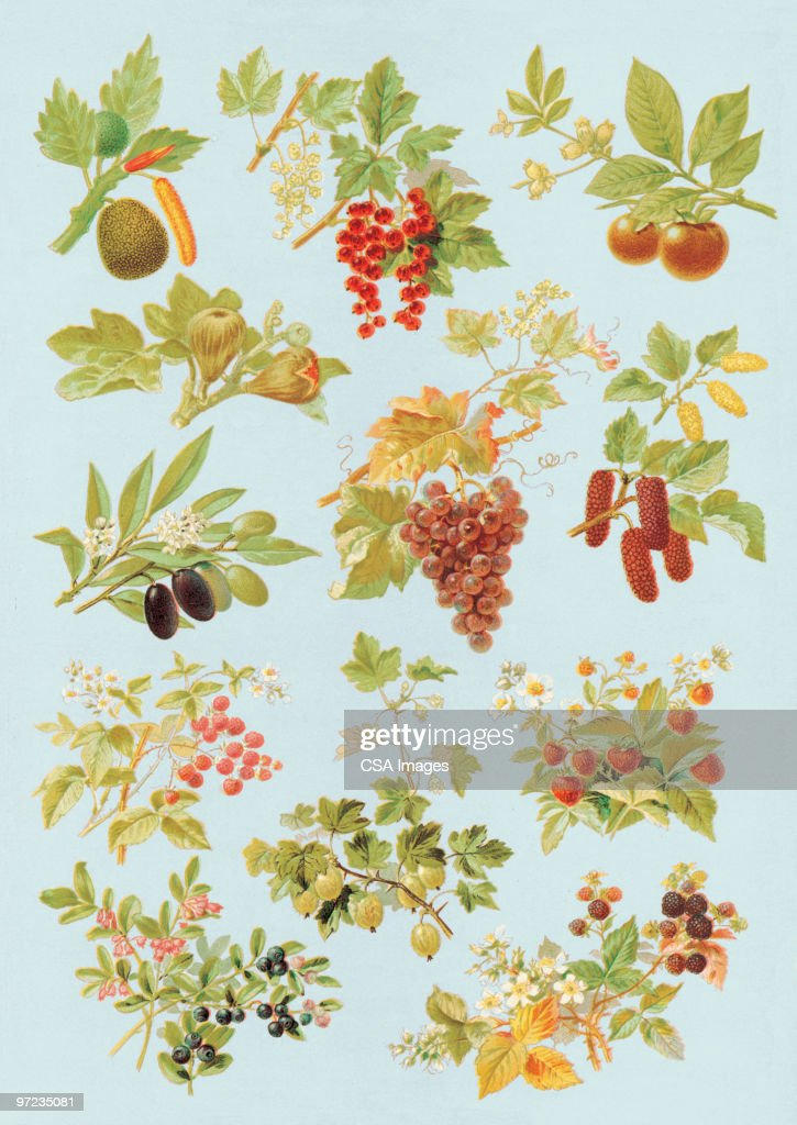 Fruit on Trees and Plants : Stock Illustration