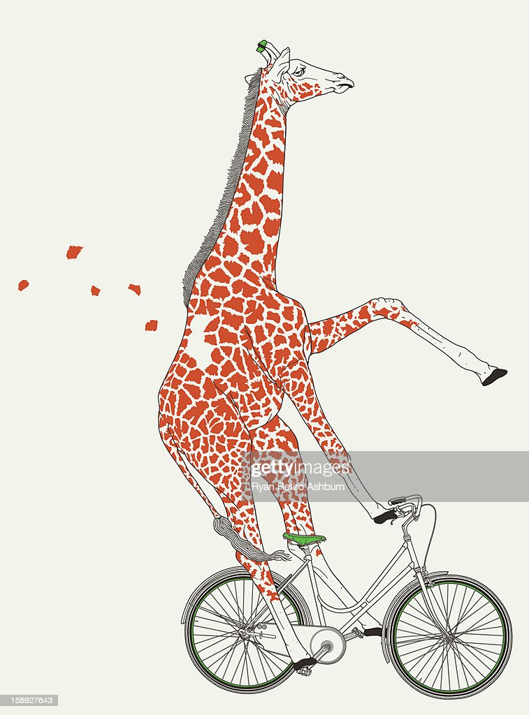 A giraffe on a bicycle : Stock Illustration