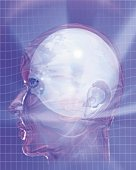 Glazing Human Head Image, CG, 3D, Illustration, Close Up, Side View