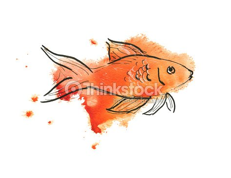 Or poissons croquis aquarelle illustration thinkstock - Croquis poisson ...