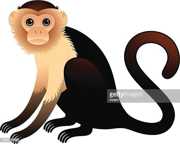 Golden Bellied Capuchin Illustration