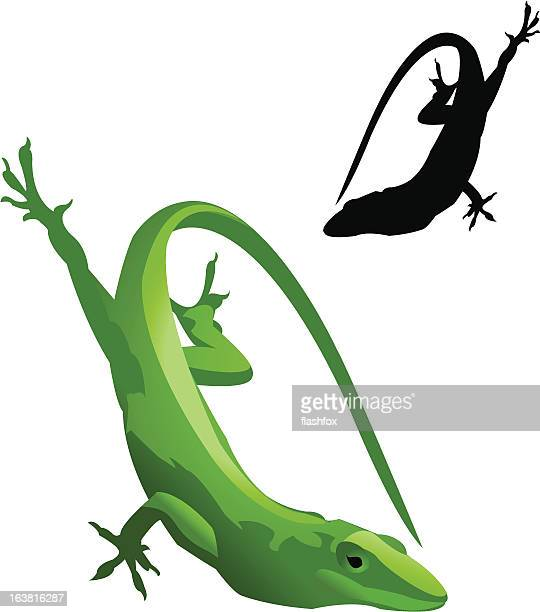 Green Lizard and Silhouette