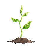 Concept of green growth for business - green plant with leaves growing in soil. Watercolor