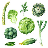 Hand drawn watercolor illustration. Set of organic products. Sketch of green vegetables isolated on white.