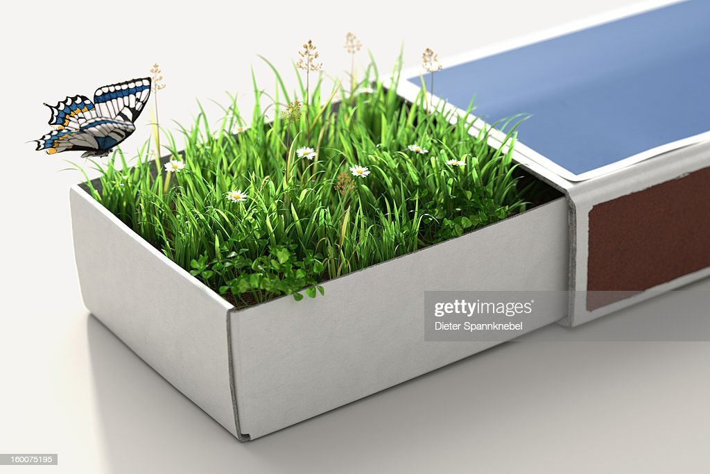 Greenfiled inside a matchbox and a butterfly : Stock Illustration