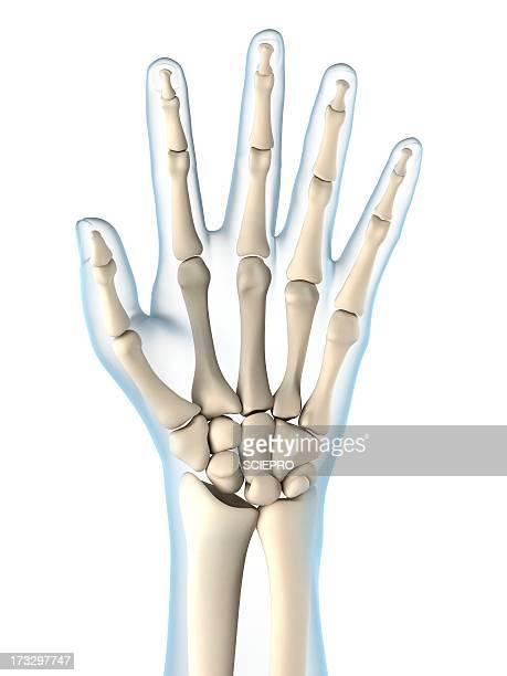 Hand bones, artwork
