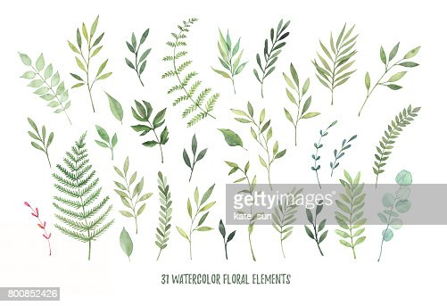 Hand drawn watercolor illustrations. Botanical clipart ( laurels, frames, leaves, flowers, swirls, herbs, branches). Floral Design elements. Perfect for wedding invitations, greeting cards, blogs, posters and more : Stock Illustration