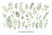 Hand drawn watercolor illustrations. Botanical clipart ( laurels, frames, leaves, flowers, swirls, herbs, branches). Floral Design elements. Perfect for wedding invitations, greeting cards, blogs, pos