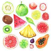 Hand painted exotic fruits set. Watercolor collection of kiwi, watermelon, guava, rambutan, amelanchier, grapefruit, blood orange, lemon, papaya, pineapple, lime and green leaf isolated on white backg