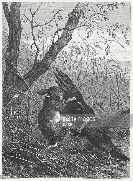 Hare defends his offspring against a Ravens, published in 1883
