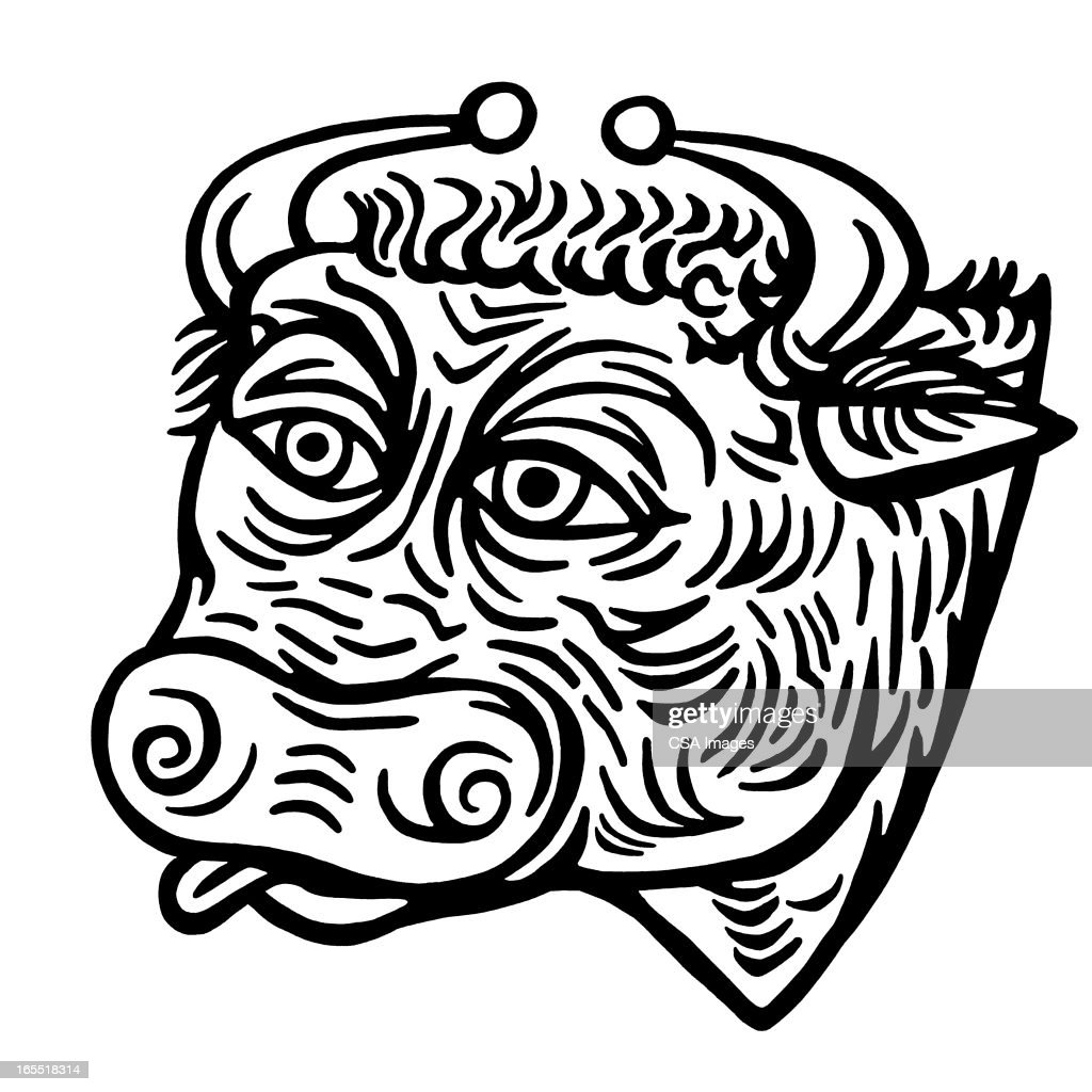 Head of a Bull : Stock Illustration