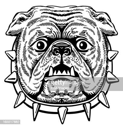 Head of a Bulldog : Stock Illustration