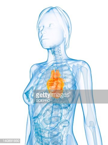 Healthy heart, artwork : Stock Illustration