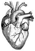 Antique engraving of human heart. Published in Systematischer Bilder-Atlas zum Conversations-Lexikon, Ikonographische Encyklopaedie der Wissenschaften und Kuenste (Brockhaus, Leipzig) in 1844. Photo b