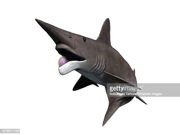Helicoprion bessonovi is a cartilaginous fish from the Paleozoic Era.