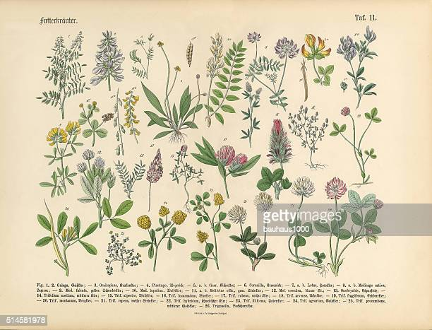 Herbs anb Spice, Victorian Botanical Illustration