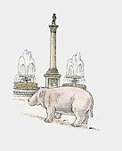 A hippopotamus next to Nelson's Column, Trafalgar Square, London