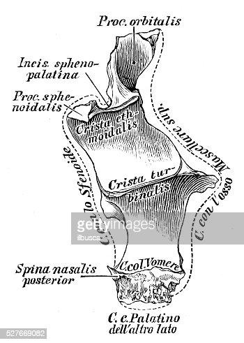 Anatomie Des Menschen Wissenschaftliche Illustrationen Pfälzer ...