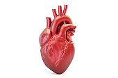 Human heart, 3D rendering isolated on white background