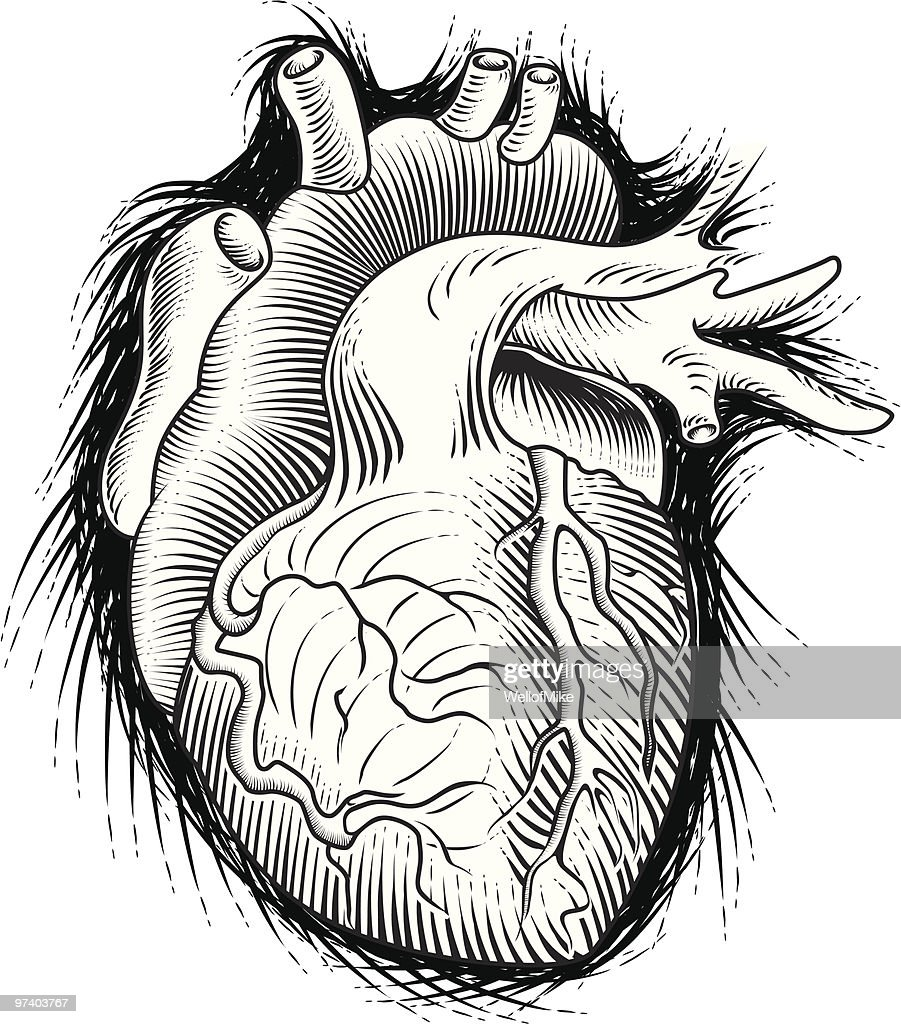 Human Heart Sketch : Vector Art