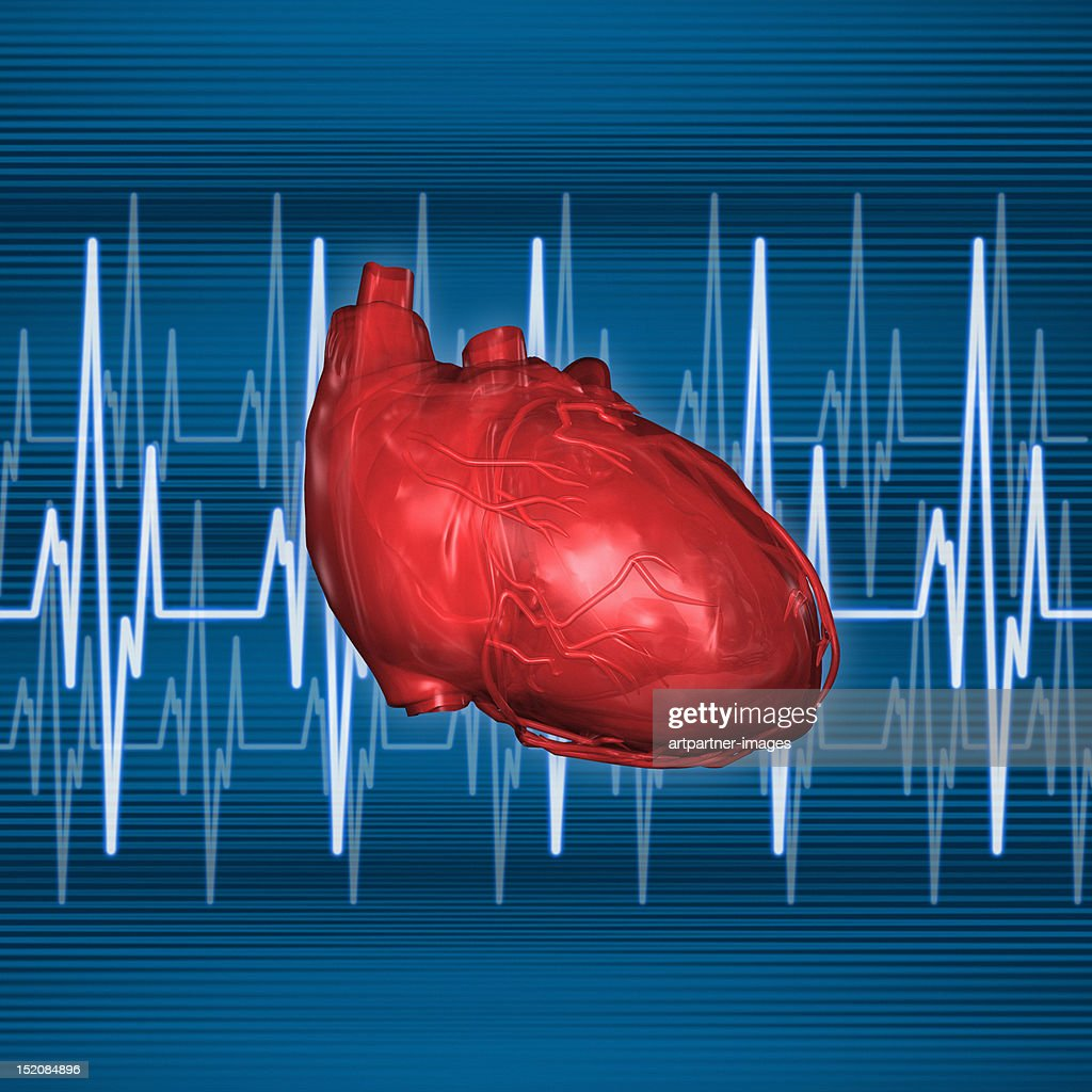 Human Heart with heart rate lines : Stock Illustration
