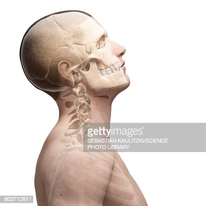 human neck bones illustration stock illustration | getty images, Human Body
