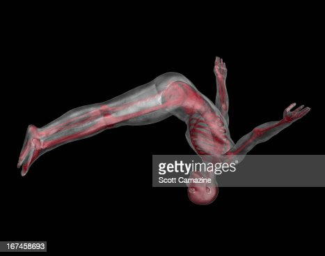 Human skeleton jumping upside down : Stock Illustration
