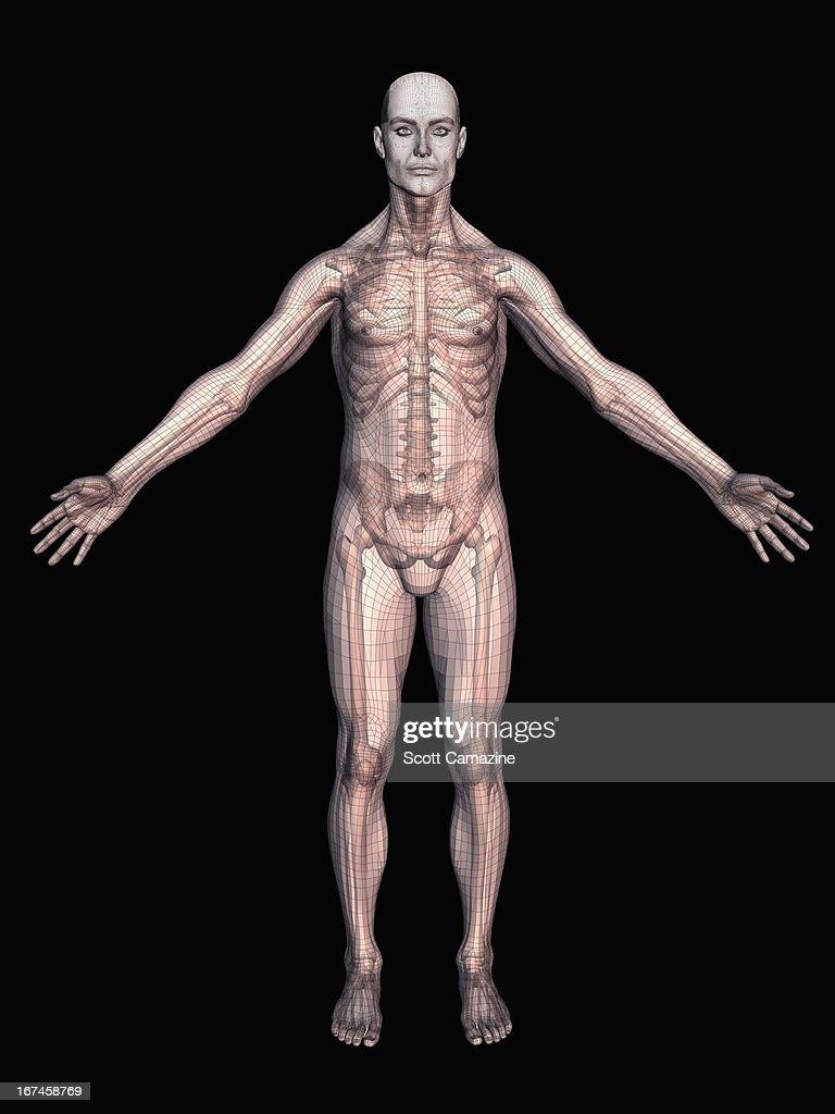 Human skeleton on black background : Stock Illustration