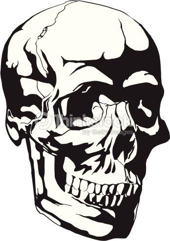 Menschlicher Schädel Anatomie Skizze Vektorgrafik | Thinkstock