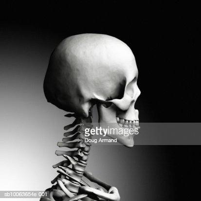 human skull and neck bones side view stock illustration | getty images, Skeleton