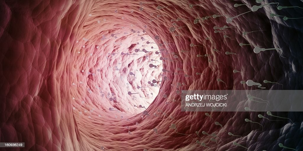 Human sperm cells, artwork : Stock Illustration