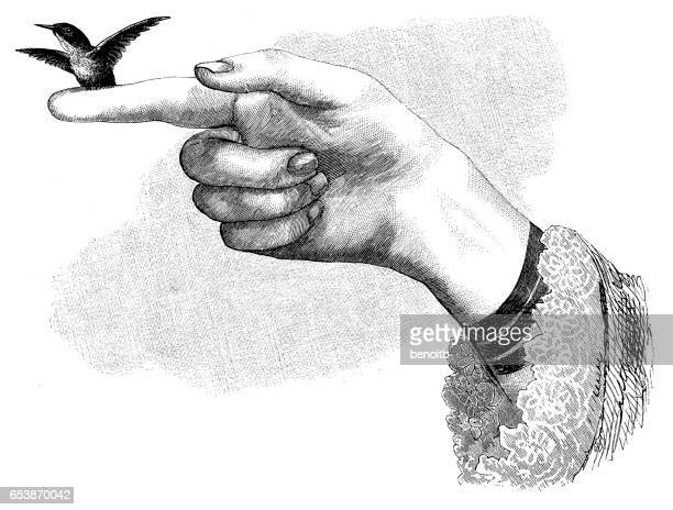 Hummingbird perched on finger