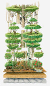 Illustration, cross-section diagram of lower part of rainforest showing variety of wildlife