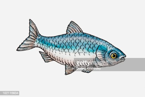 Illustration of a blue fish side view stock illustration for What sides go with fish