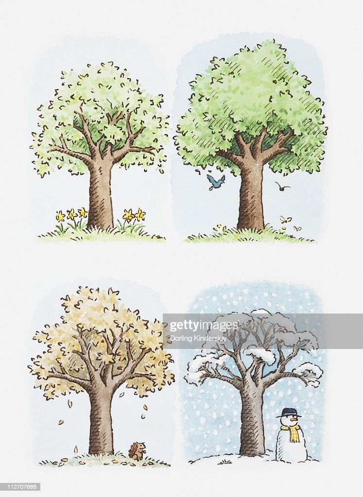 Illustration of a tree through the season : Stock Illustration