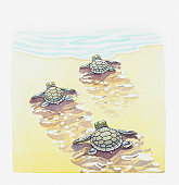Illustration of baby sea turtles making their way to the water