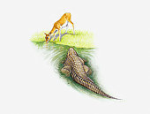 Illustration of crocodile hunting young gazelle drinking at water's edge