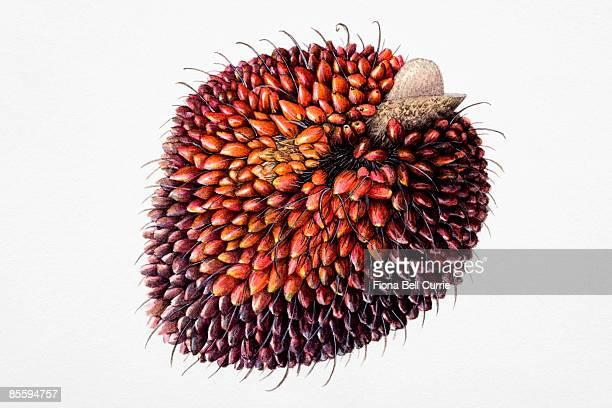 illustrations et dessins animés de palmier à huile getty images