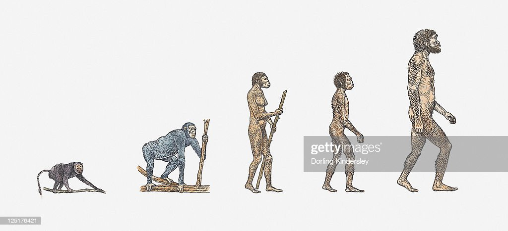 Illustration of evolution of man : Stock Illustration