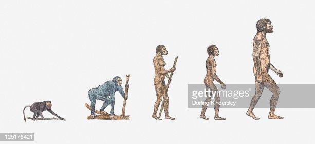 Illustration of evolution of man : Stock Illustration