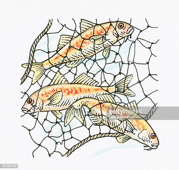 Illustration of fish caught in fishing net