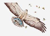 Illustration of Fish eagle or Osprey (Pandion haliaetus) carrying its prey