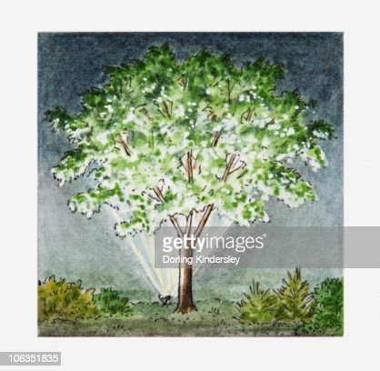 Illustration of floodlit tree : Stock Illustration