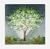 Illustration of floodlit tree