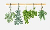 Illustration of herbs hung up to dry