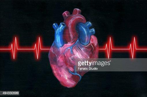 Illustration of human heart with pulse trace over black background : Ilustração de stock