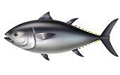 Southern bluefin tuna.